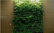宁波常见的垂直绿化植物品种介绍