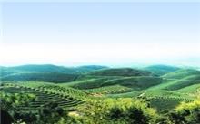 加强森林资源保护 促进生态环境建设