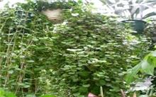 北京中蔬大森林花卉交易市场