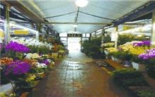 北京海淀区花卉市场