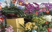 上海精盛花卉交易市场