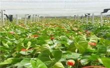 海南热带花卉交易市场