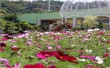 长沙花卉市场|湖南省长沙花卉大世界