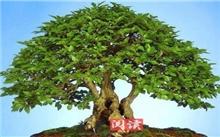 """山东:东营前邵村盐碱地里种出""""摇钱树"""""""
