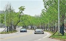 温州:绿化变立体 市区林荫大道初见雏形