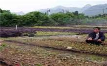 甘肃:临洮县苗木产业发展迅速 年产值6000多万元