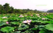 江西:赣州石城县护好青山绿水开辟富民之路