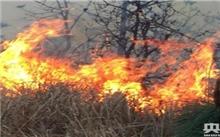 云南:玉溪森林火灾今日蔓延至昆明境内 千余人现场扑救