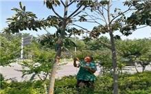 辽宁:随意砍伐城市绿化树木将依法严处