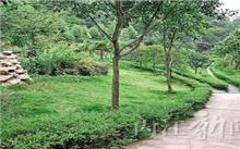 湖北省大兴森林城市建设让城市多一抹绿色