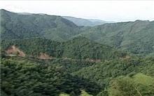 山东省郯城县完成雨季造林8000余亩