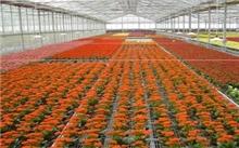 福建漳州花卉产业呈现强势增长态势