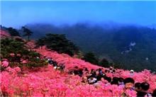 第三届中国麻城杜鹃文化旅游节4月28日举行