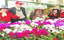 四川:冕宁与荷兰花卉合作项目启动