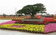 2011中国(中山)南方绿化苗木博览会闭幕