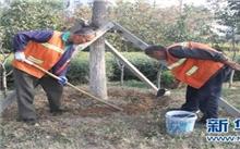 德州:启动园林绿化养护管理工作 确保苗木安全