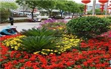 上海:举行绿化职业技能花坛布置竞赛