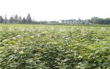 江西:新干加强新造林苗木管护