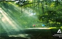 广东湛江:森林覆盖率与林业总产值均有提升