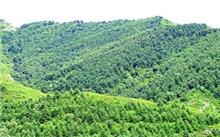 浙江:平湖市完成绿化造林面积6656.5亩
