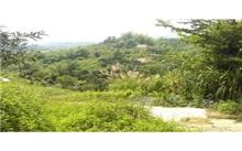 临沂市开展林地调查 明年建成林地资源数据库