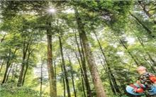 贵州赤水市林业局:建立电子档案保护珍稀树木