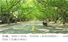 上海:未来将创建百条林荫大道 营造清凉美景