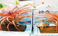 陕西:西安世园会国际水培植物花卉展览开幕
