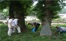 上海:徐汇区绿化管理署开展古树白蚁普查