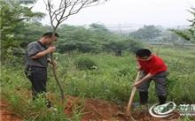 娄底:鸭丝塘公园启动绿化建设