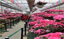 西安:世园会国际杜鹃花展览开展