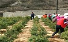 辽宁:阜新春季造林占造林任务的109.3%