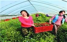 """安徽:""""绿色经济""""富农家"""