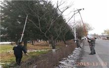 冬季绿化树木修剪要小心 专家有话说