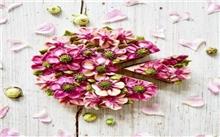 春节将至花卉进入销售旺季 花卉市场大蛋糕达亿元