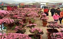 山东:青州花卉市场生意红火