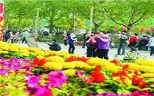 安徽:52万盆鲜花滁城街头绽放