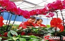 天津:梨园花卉市场迎来销售高峰