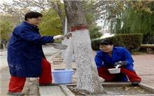 大港:管理处绿化队确保树木安全过冬