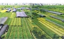 江西:吉水苗木产业实现转型升级