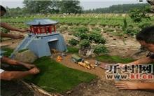 河南:大型菊艺盆景《清明上河图》广受好评