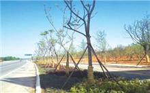 """武汉:107国道边构建惠民""""绿色长廊"""""""