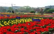 西安:植物园举办迎双节花卉新品种展示会