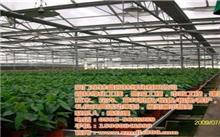 河南植被生态质量指数持续增长