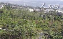 武隆:建设森林重庆 将新增森林100万亩