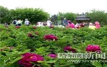 上海:植物园牡丹迎来盛花期