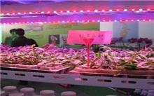 第十二届中国国际花卉园艺展览会即将开幕