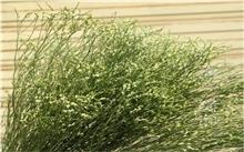干旱致云南花卉竞争力受损 优质鲜花价涨五成