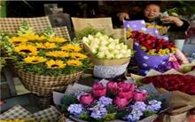 昆明花卉产值突破24亿