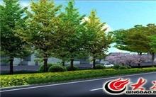 """河北:省绿化办详解""""年年种树不见树""""的原因"""